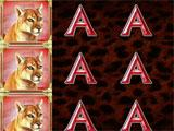 CATS Casino Cougar