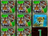 CATS Casino Tigers