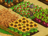 Crops ready for harvest in Farland