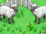 Feed Sheep in Fashion Farm