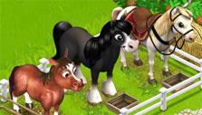 Family Farm: horses