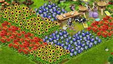 Field of flowers in Farmerama