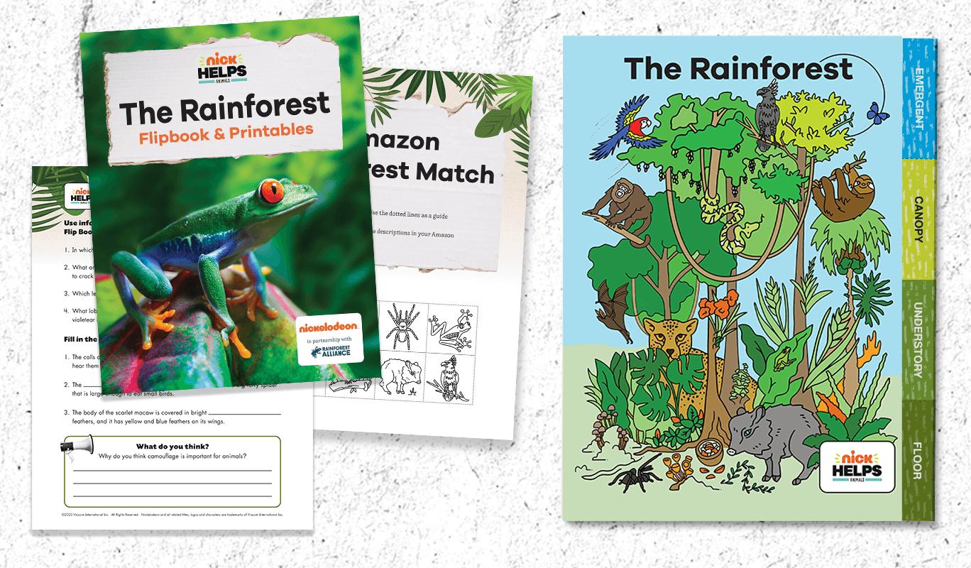 Rainforest Flipbook and Activity Pack