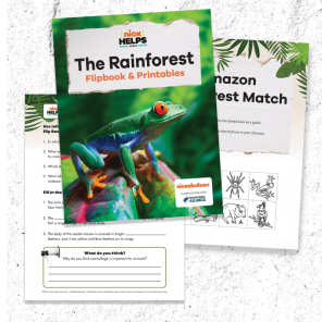 Learn About the Rainforest