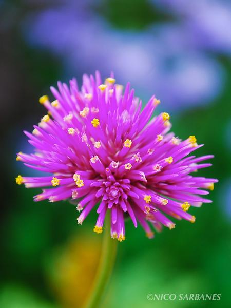 Flower2water