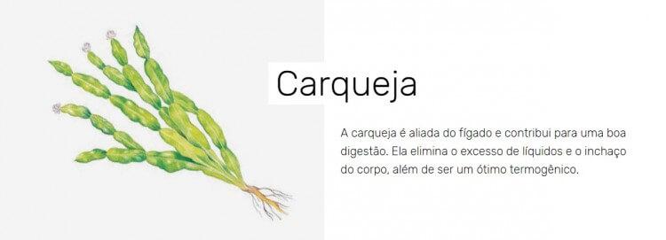 chaverde-carqueja-desincha