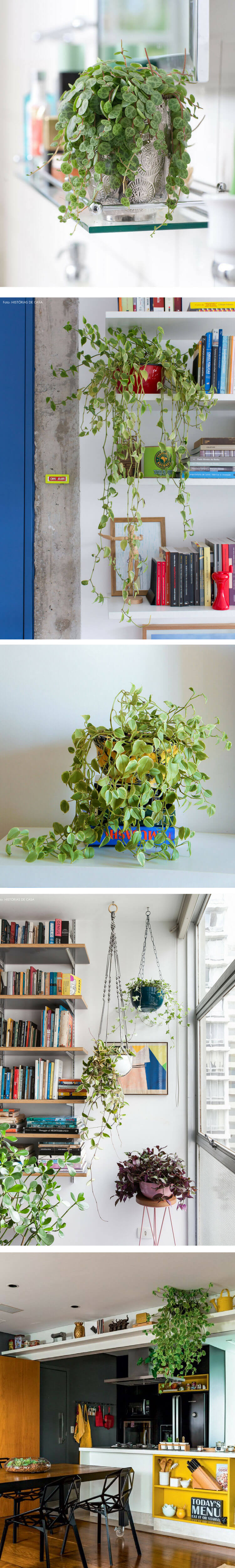 Plantas-para-escritorio (1)