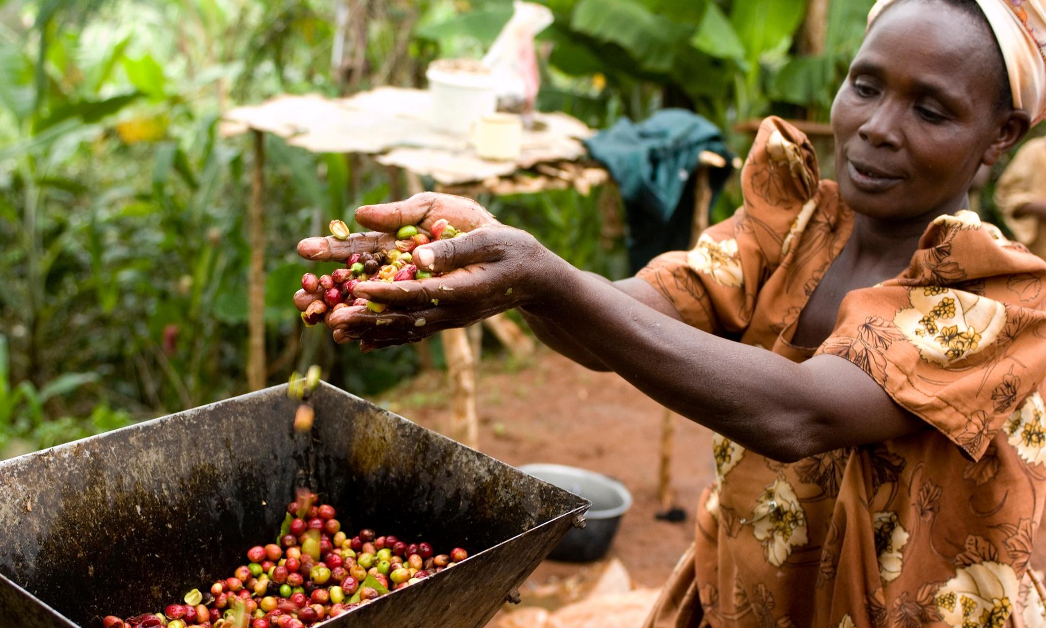 WHAT HAPPENED TO KAGOGO COFFEE FACTORY IN RUKUNGIRI?