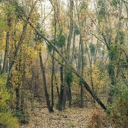 Sactriverinewoods