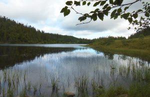 Hiking in Muddy Bymarka, Trondheim