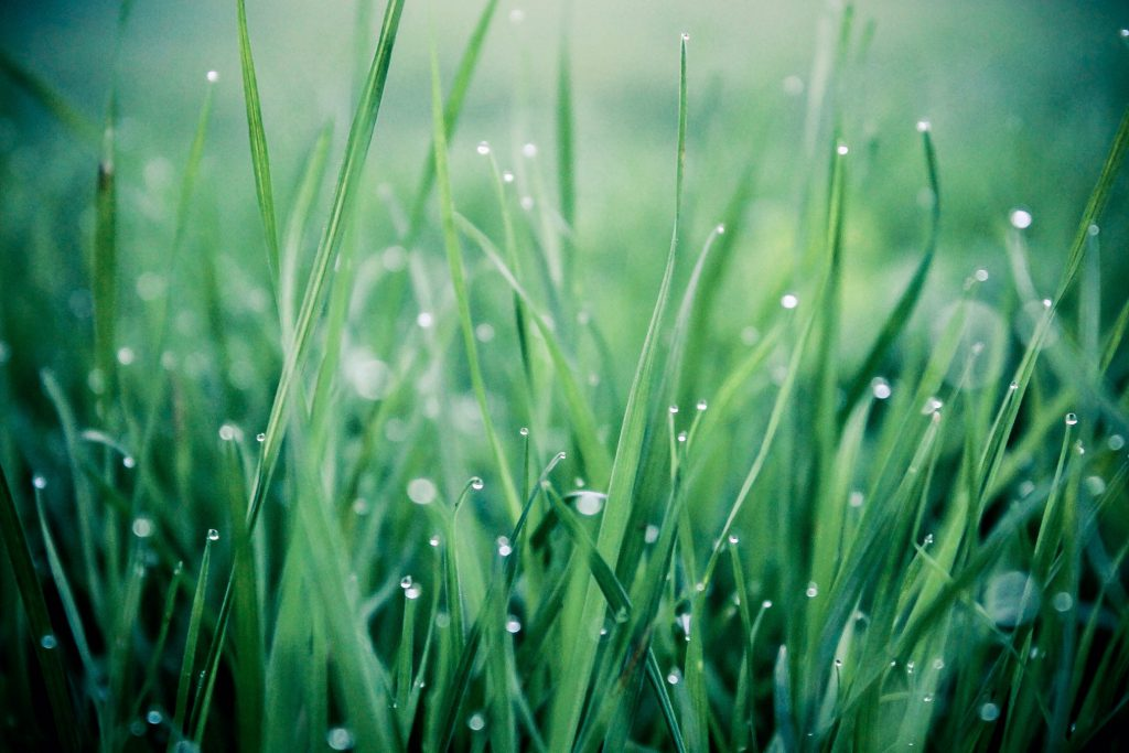 Macro image of wet grass