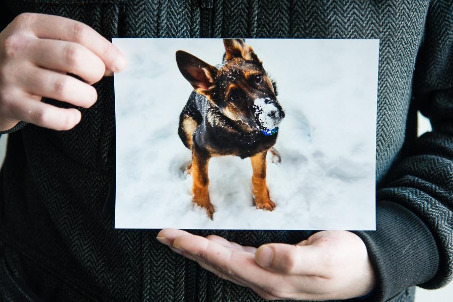 holding up photo of dog