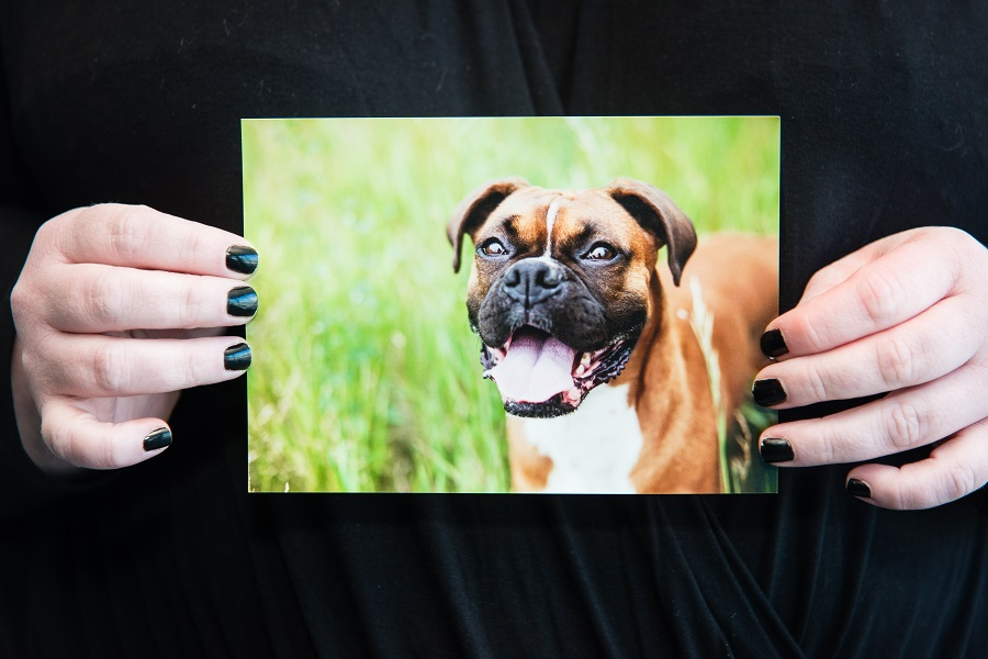 Held up photo of a dog