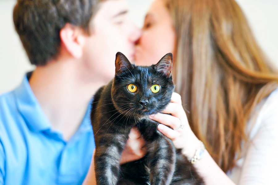 couple kissing holding their cat
