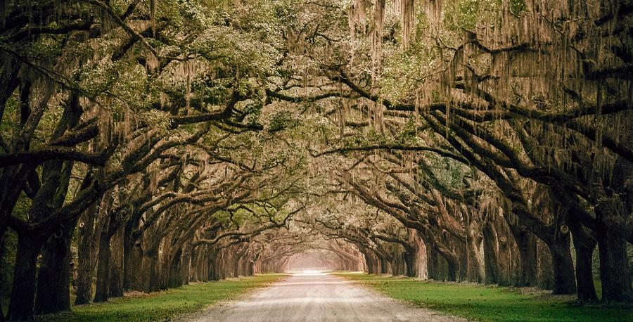 Savannah Georgia Trees