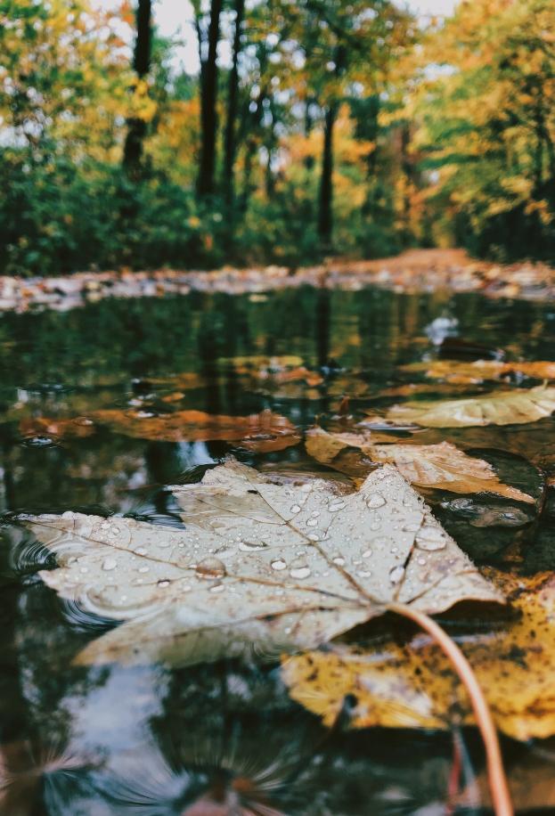 Fallen leaf in the woods