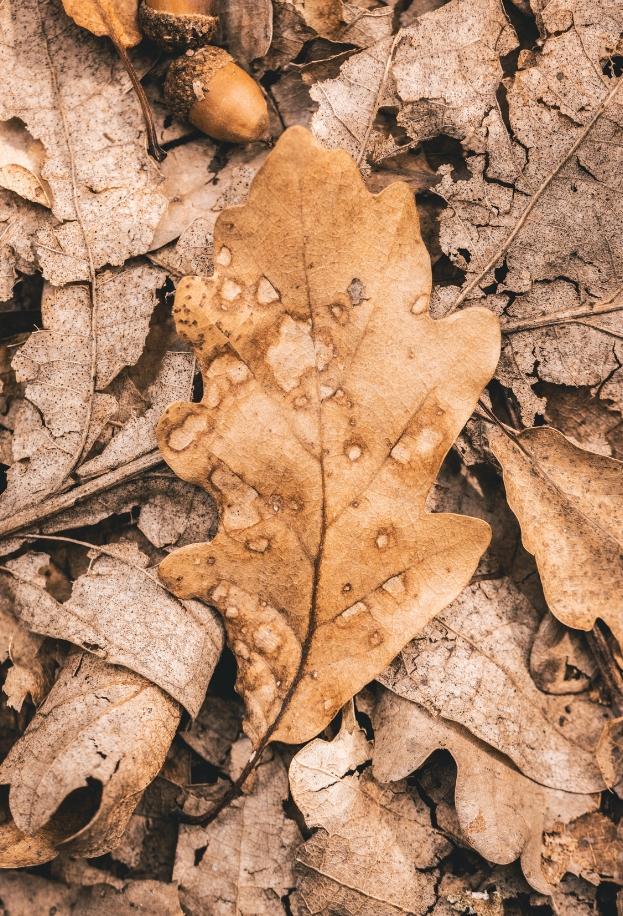 Close up of fallen leaf