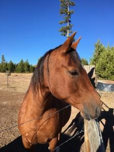 Cassie Horse