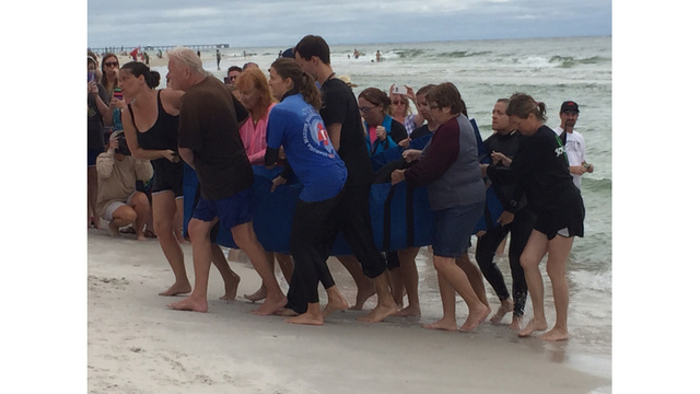 Whale euthanized after washing up in Gulf Shores