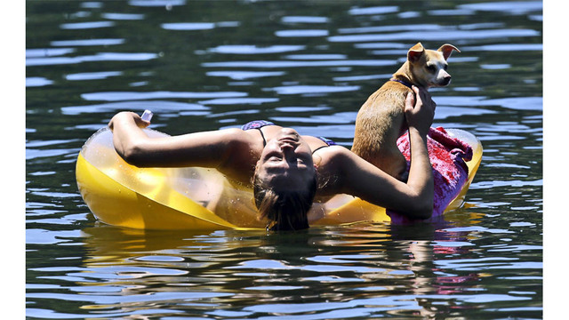 Tips to keep pets safe in high temperatures