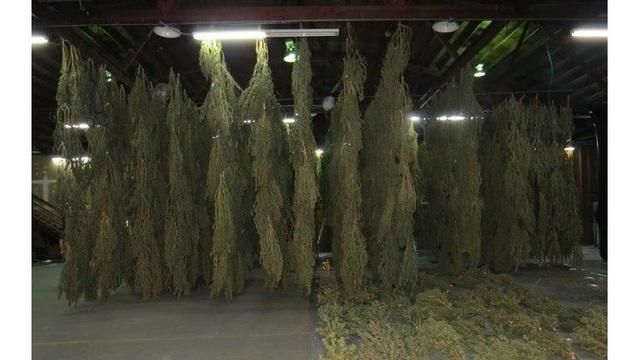Police seize 3,000 pounds of marijuana in SE Portland