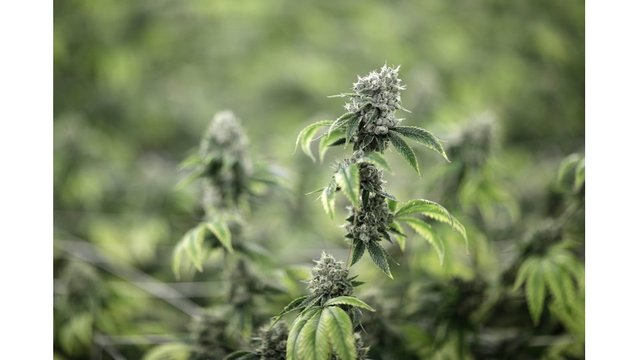 Smoked pot and want to enlist? Army issuing more waivers