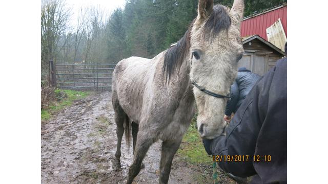 9 neglected horses seized in Molalla