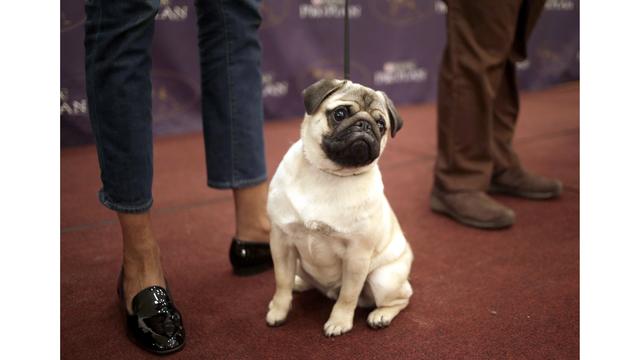 Oregon podría prohibir a las tiendas de mascotas vender perros de criadores