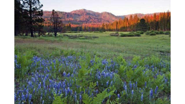 400 acres donated to Yosemite National Park