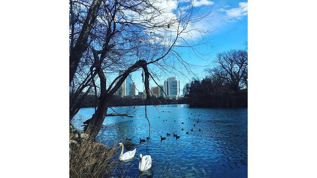 Lady Bird Lake_402518