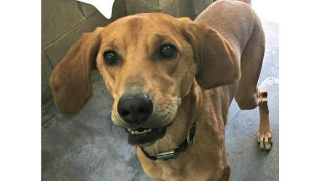 Anonymous donor pays adoption fees for all 'at risk' dogs at Texas shelter