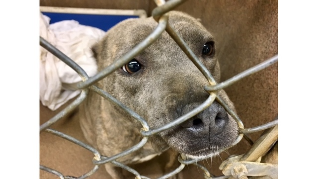Florence humane society moves several animals to Virginia