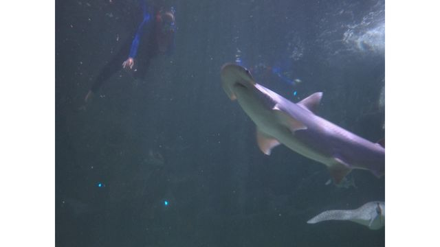Vets with PTSD participate in alternative therapy at Ripley's Aquarium