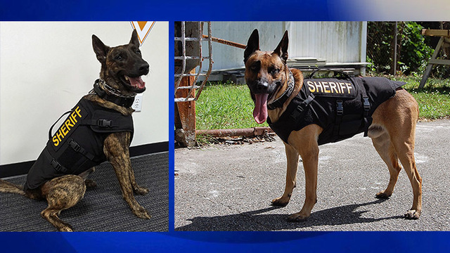 Georgetown County K9 officers get protective vests