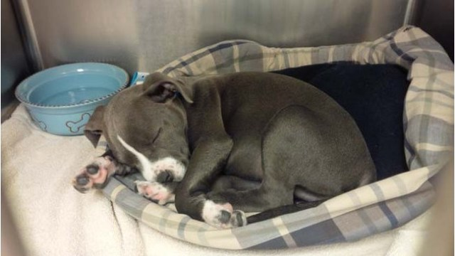 Charges approved against owner of puppy that ingested heroin