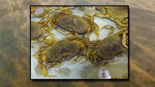 Shellfish lab in Auburn gets $35,000 through oyster social