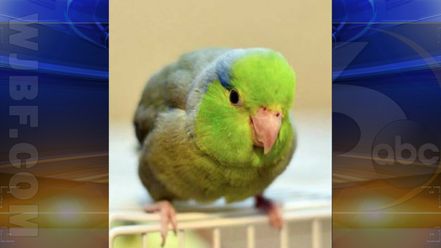 Pet Bird Missing After Car Crashed Into Grovetown Home