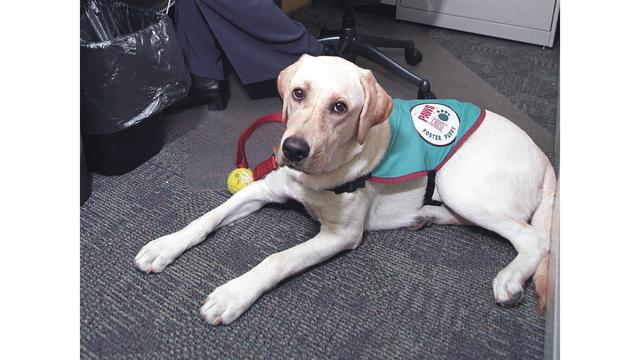 SC bill would crack down on fake service animals