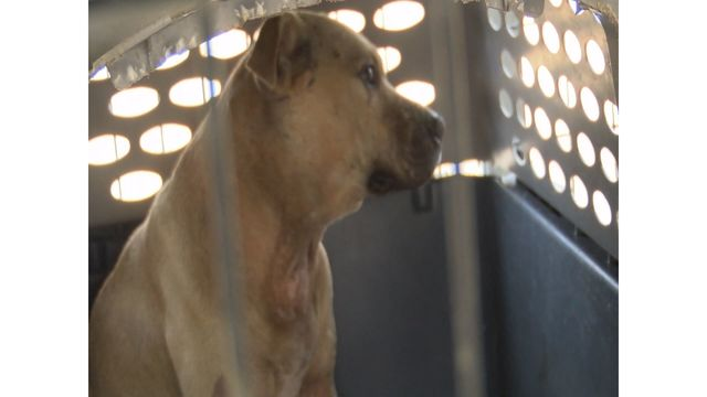 Animal abuse, dog fighting bills advance to Mississippi House