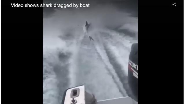 Men Behind Disturbing Shark Dragging Video Identified