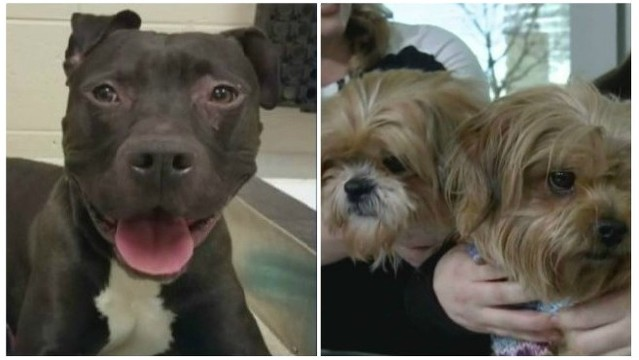 KCAS Pets of the Week: Mr. Meter, Sandy and Stout