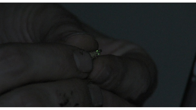 Look out for 'glow worms' this fall