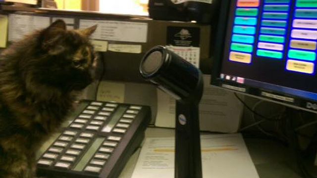 PICS: Lost kitten working as Tryon Police dispatcher until her family is found
