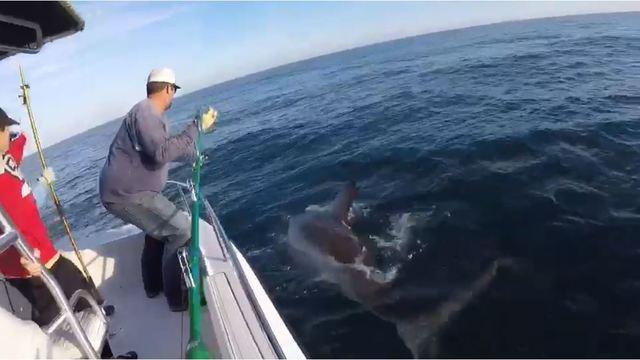 3,000 pound great white shark caught off Hilton Head