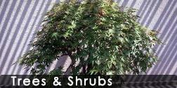treesandshrubs_252_126
