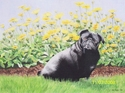 Carol Granger, Columbus, Ohio, Colored pencil, animal portrait, black dog, pug breed, with yellow flowers - Animals Drawing