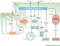 zinc in the physiology and pathology of the cns