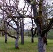 Woodlandtypesthumbnail