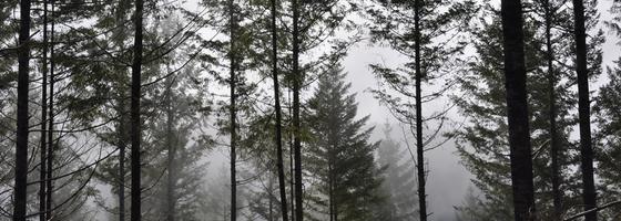 Forestsheader