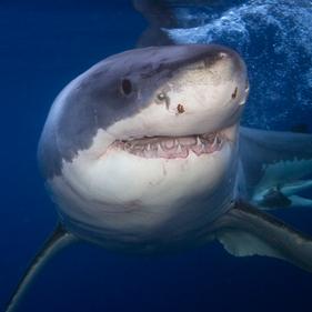 Sharksoforegonthumbnail